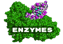 enzymes supplementation bluegreenfoods breakdown-afa
